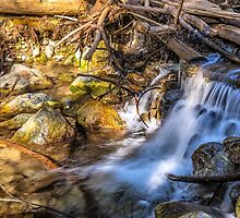 WOOD, STONE, & WATER by joseph s  giacalone