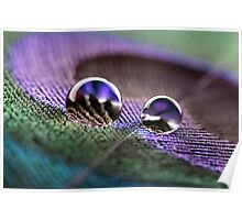 Water droplets on peacock feather Poster