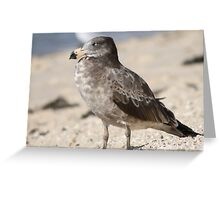 Baby Albatross on the beach Greeting Card