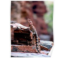 Karijini Lizard Poster