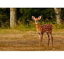 Alert Whitetail Fawn Photographic Print