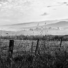 Yarra Valley Morning Mist by Margaret Metcalfe