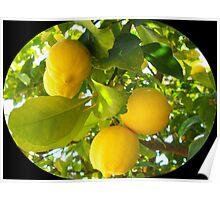 Juicy lemons on a tree Poster