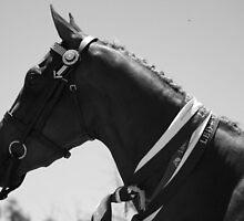show pony by Tammy Kuiler
