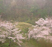 Cherry Trees in Rain #4 by Tomoe Nakamura