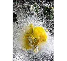 Yellow Pansy Photographic Print