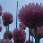 Chives Against A Blue Sky by aneyefornature