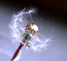 Another Dandelion by Joyce Knorz