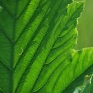 sunshine though the leaf. by newcastlepablo