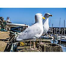 Sea guls Photographic Print