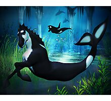 Killer Whale Sea Horse Photographic Print