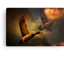 Flying Ducks Metal Print