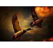 Flying Ducks Photographic Print