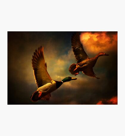 Flying Ducks Photographic Print