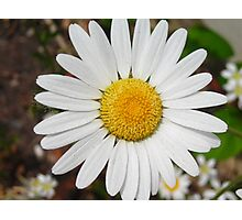 That'll be the Daisy Photographic Print