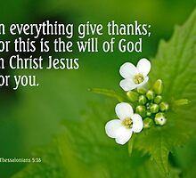 In everything give thanks ~ 1 Thessalonians 5:18 (3 of 3) by Robin Clifton
