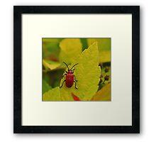 Cardinal Beetle. Framed Print