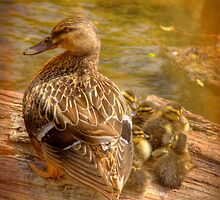Family by Mark Richards
