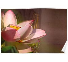 Lotus by a Vase Poster