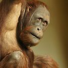 Orangutan by Lindie Allen