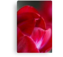Deep pink and red Canvas Print