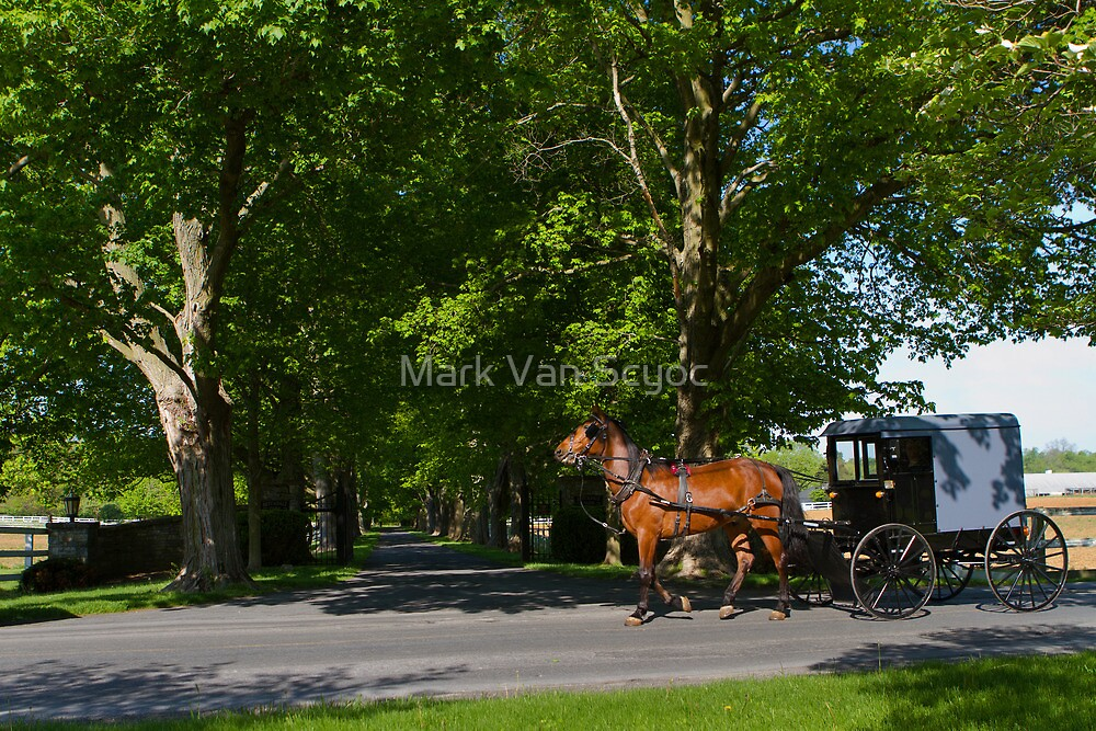Horse and Buggy on a Spring Morning by Mark Van Scyoc