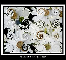 Daisies (Curlicue Special Effect) by Rose Santuci-Sofranko
