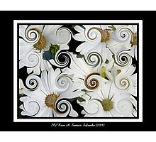Daisies (Curlicue Special Effect) Photographic Print