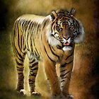Sumatran Tiger  by Saija  Lehtonen