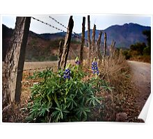 Lupines in Rural Jalisco Poster