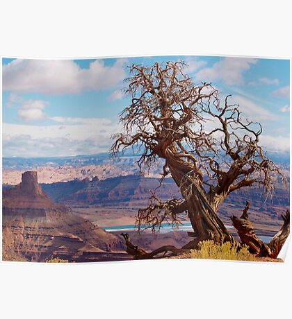 Twisted Juniper at Dead Horse Point, Utah Poster