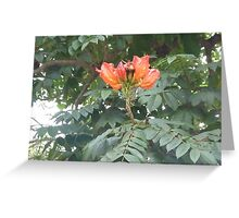 Briiliant Orange Flowers Reaching for the Sky Greeting Card