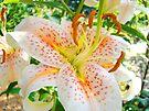 Bright Orange Lily Flower Floral art prints Baslee Troutman by BasleeArtPrints