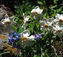 Spring Scenario by MarianBendeth