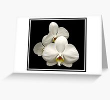 White Orchids on Black Background Greeting Card