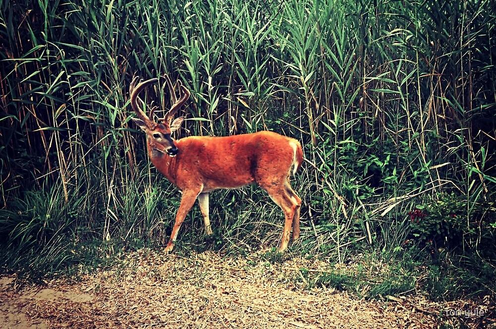 The Buck by tori yule