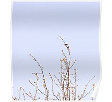 kissing House Finch birds Poster