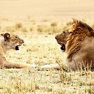 Post-coital Conversation, Lions, Maasai Mara, Kenya  by Carole-Anne