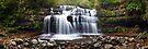 Liffey Falls, Great Western Tiers, Tasmania by Michael Boniwell
