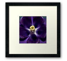 Five Lavender Doves Framed Print
