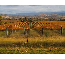 Across the vineyards just before sunset. Photographic Print