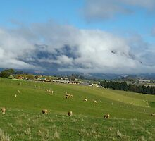 Sheffield's Mt Roland - clouds galore by gaylene