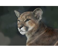 Beautiful Joseph - Cincinnati Zoo Photographic Print