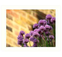 Chives against Brick Art Print