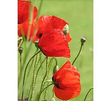 Field Poppies and grass Photographic Print