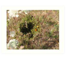 Ladybugs Art Print