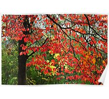 Autumn in Mount Beauty Poster