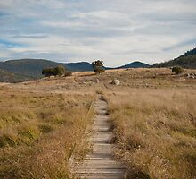Yankee Hat walking track, Namadgi National Park, Australia by Simone Clark