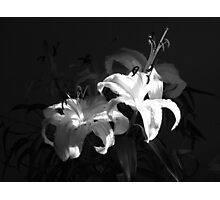 Lillies in sunlight (landscape) Photographic Print