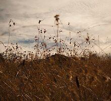 Yankee Hat walking track, Namadgi National Park, Australia by Simone Clark